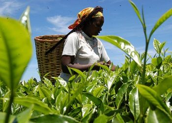 World Bank values Ghana's agriculture sector at $12.1 billion World Bank values Ghana's agriculture sector at $12.1 billion agriculture 2 350x250