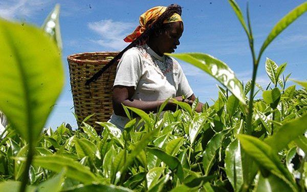 World Bank values Ghana's agriculture sector at $12.1 billion World Bank values Ghana's agriculture sector at $12.1 billion agriculture 2 600x375