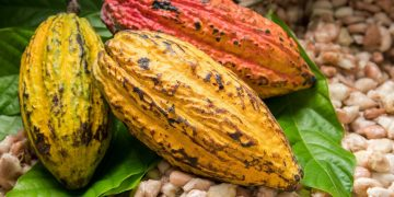 cocoa - norvanreports Unilever Ghana emerges sole gainer on GSE at end of trading session on Tuesday Unilever Ghana emerges sole gainer on GSE at end of trading session on Tuesday cocoa 1 360x180