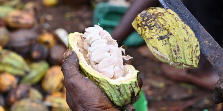 ghana, cote d'ivoire threaten to name and shame chocolate brands for poor pay Ghana, Cote d'Ivoire threaten to name and shame chocolate brands for poor pay cocoa 750x375