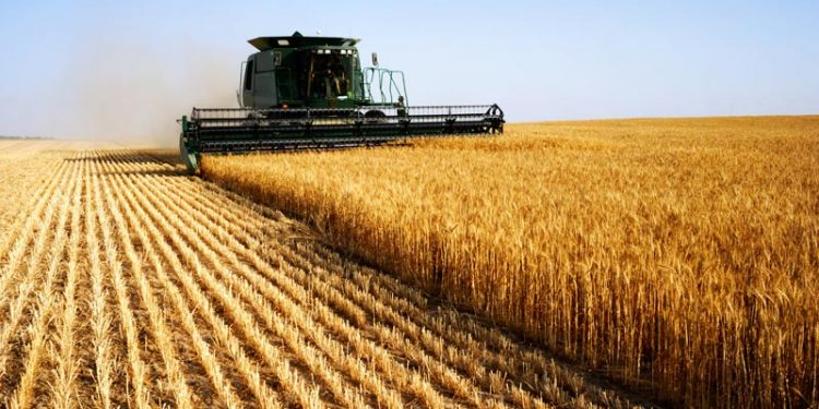 Global trade and investment leaders agree agriculture is the most lucrative sector in Africa - GBF survey Global trade and investment leaders agree agriculture is the most lucrative sector in Africa – GBF survey Ghana Agriculture Market 750x375